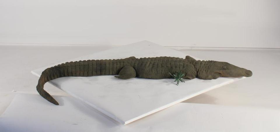Alligator 8 ft Floating